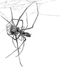 digital drawing of two spiders mating, hanging in a net. title: BDSM. Size: 5 x 4 centimeters.