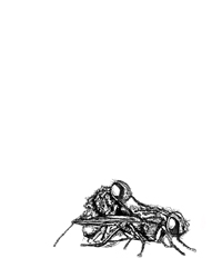 digital drawing of two flies mating. title: Doggy Style. Size: 5 x 4 centimeters.