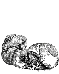 digital drawing of two snails mating. title: same sex. Size: 5 x 4 centimeters.