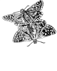 digital drawing of two butterflies mating. title: Fling. Size: 5 x 4 centimeters.