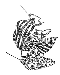 digital drawing of three bugs mating. title: Threesome. Size: 5 x 4 centimeters.